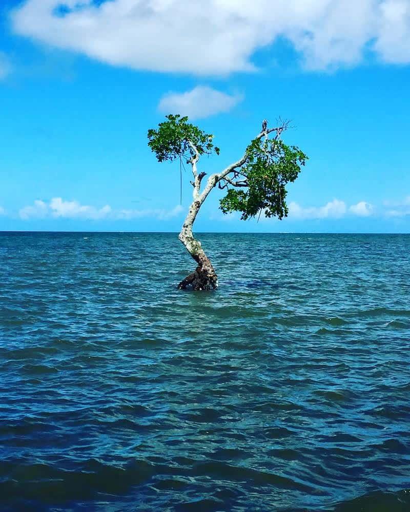 Milla Vahan ottama valokuva, jossa näkyy merestä nouseva puu.